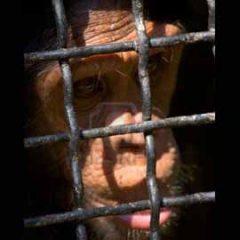 La Corte di Strasburgo contro la libertà di espressione e i diritti animali?
