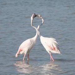Un' idea per S. Valentino: adotta una specie in pericolo!